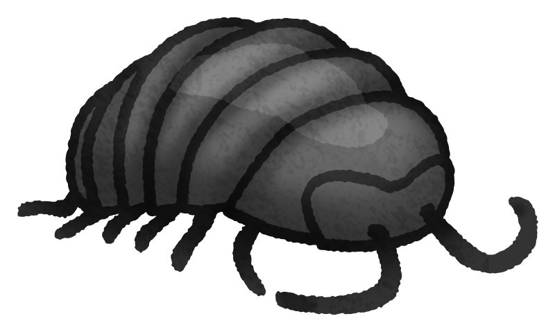 Woodlouse / Pill bug / Roly-poly