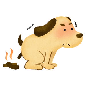 Dog pooping