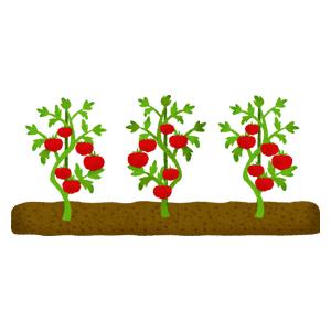 トマトの無料イラスト フリーイラスト素材集 ジャパクリップ